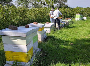 Farm tour activity honeybees