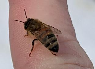 Bee visit