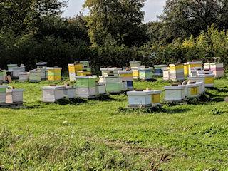 Circling Hawk Honey Farm Main Bee Yard